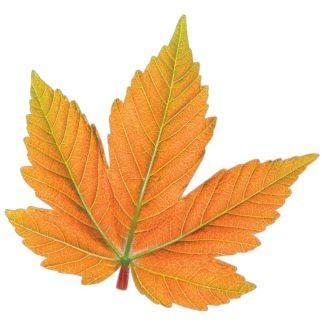 Осенний набор Лист рыжий