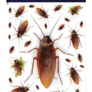 Наклейка на стекло тараканы