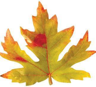 Осенний набор кленовый лист, 10шт, 18см, №0